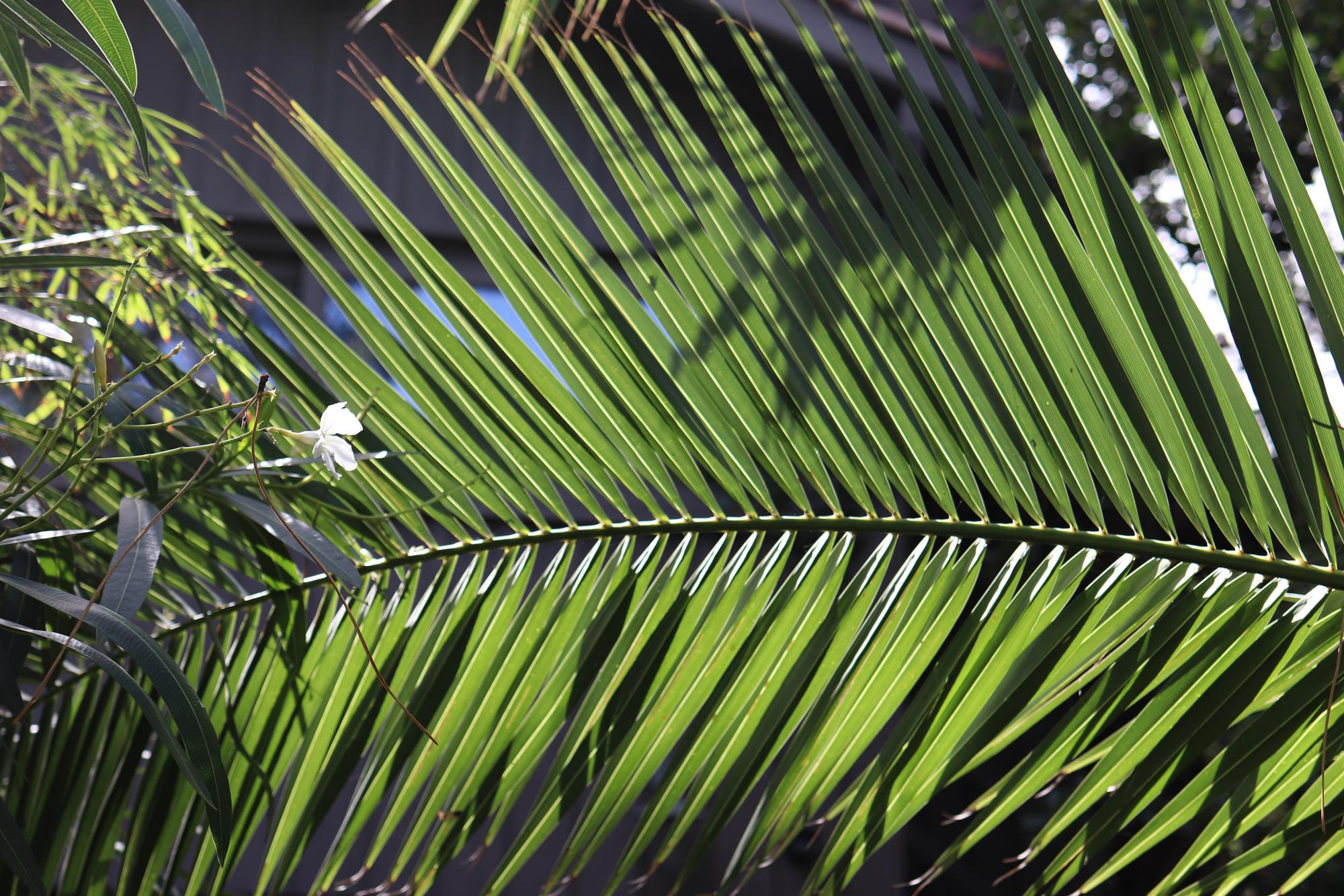 photo de lumières sur un palmier