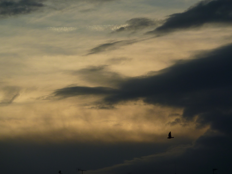 Bird on the Sky at sunrise