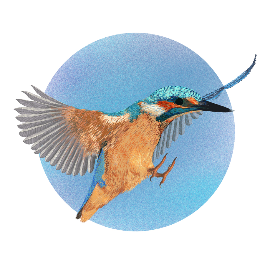 dessin de l'oiseau martin pecheur