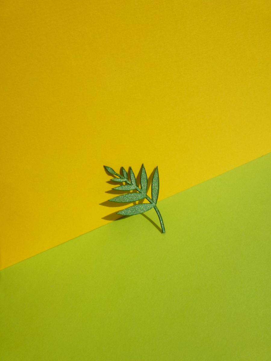 petite palme verte découpée dans le style still life photography