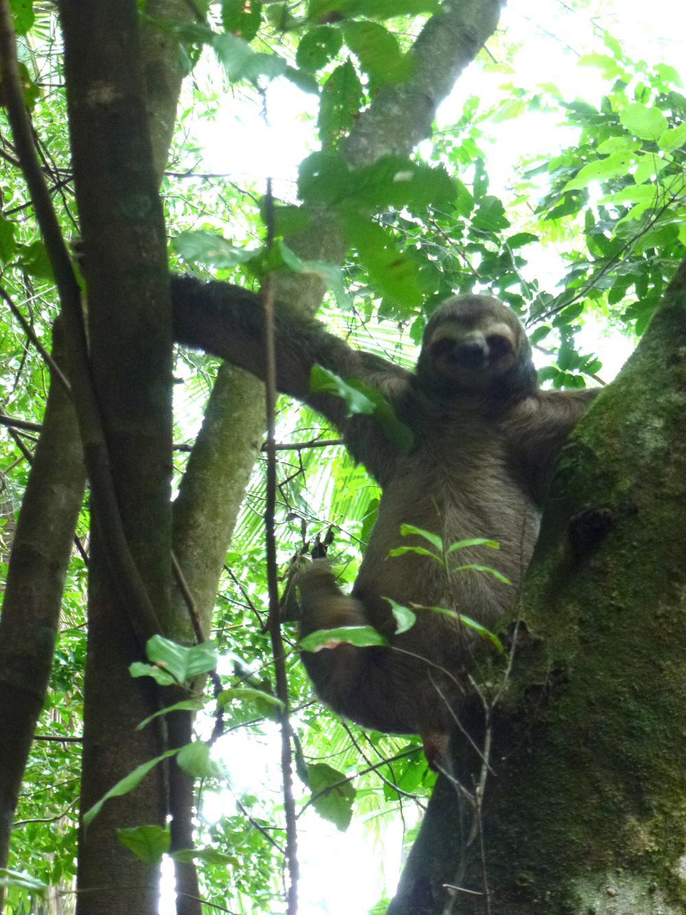 photo du paresseux into the wild
