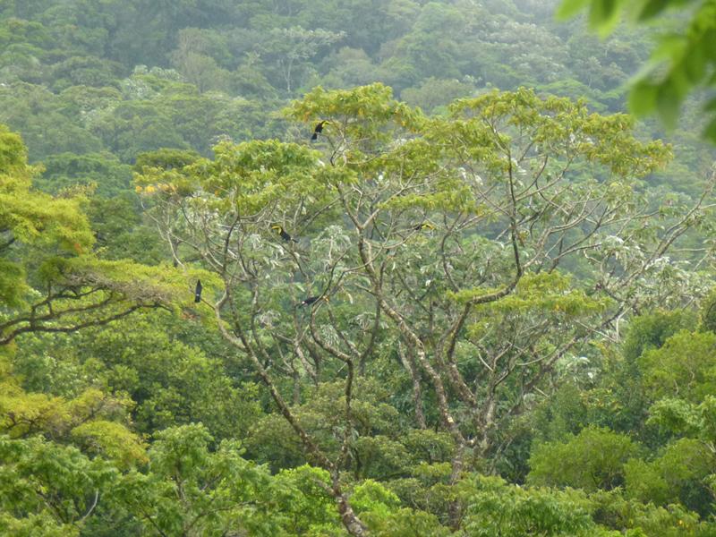 photo de l'arbre aux toucans, par famille, tous jaunes